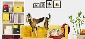 قصۀ برند: IKEA پسرکی با سودای همیشگی کسبوکار